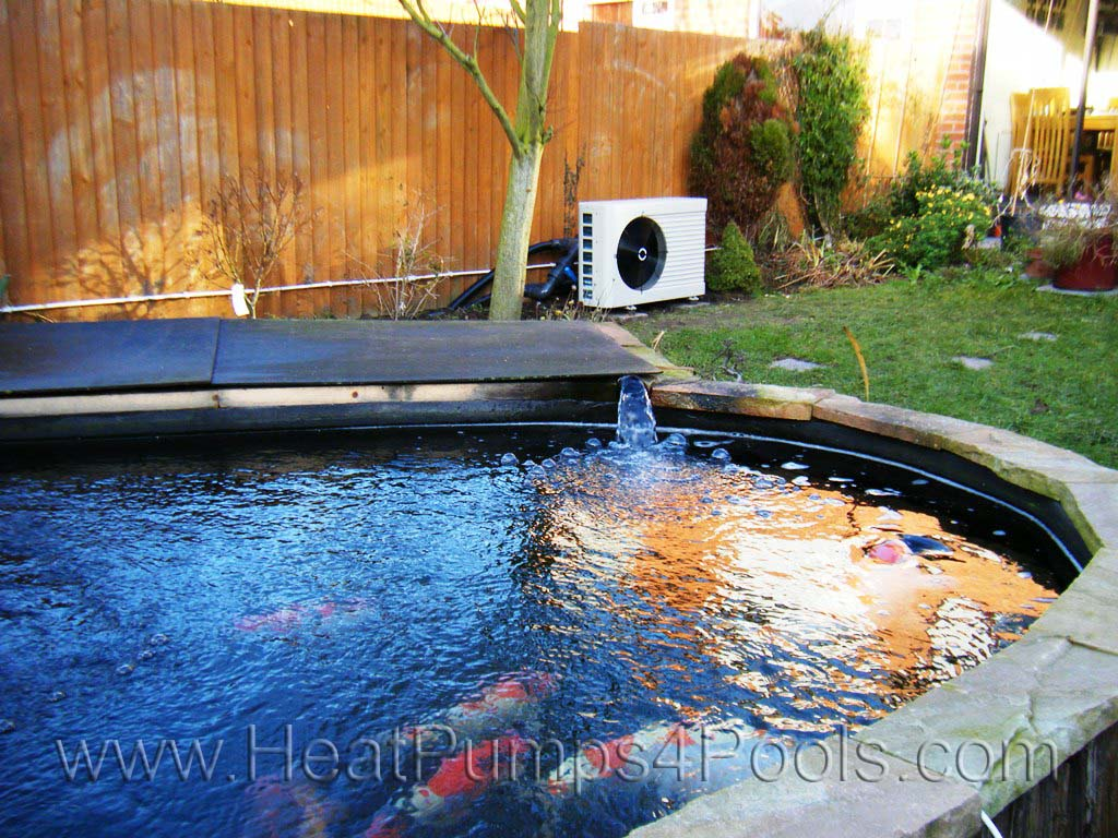 Pool heat pump photo gallery for Koi pond next to swimming pool