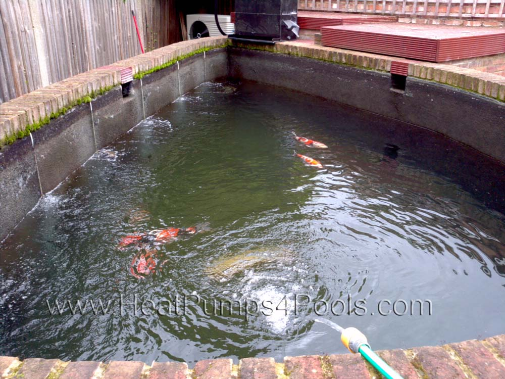 Photo gallery heatpumps4pools for Koi in above ground pool