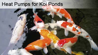 Koi pond heating with a heat pump for Koi pond specialist